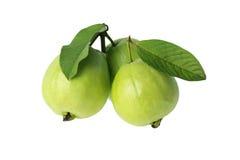 guava tre arkivfoto