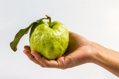 Guava (tropical fruit) in hand Royalty Free Stock Images