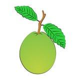 Guava Royalty Free Stock Photos