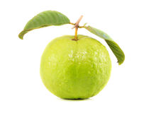 A Guava on White Background. One Light Green Guava on White Background Royalty Free Stock Images