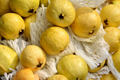 Guava in yellow Royalty Free Stock Photography