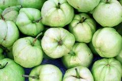 Guavafrukt Fotografering för Bildbyråer