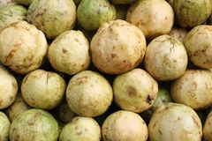 Guavas Royalty Free Stock Image