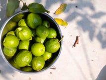 Guavas Royalty Free Stock Photos