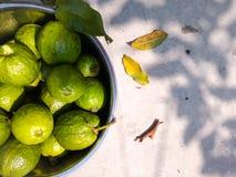 Guavas Stock Photography