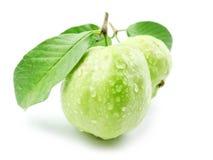 guavas liść Fotografia Royalty Free