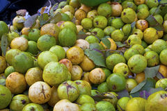 Guavas on the market Stock Photography