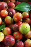 Guavas (vertical) Royalty Free Stock Image