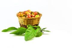 Guave Stockbilder