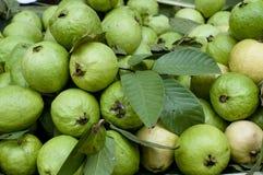 Guave beroemd in elk land stock foto
