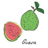 Guave en gesneden stuk Stock Foto's
