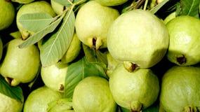 Guaven Lizenzfreie Stockbilder