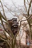 Guaxinins urbanos em uma árvore Imagem de Stock