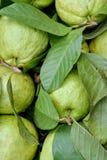 Guayaba fresca de la manzana en verde Foto de archivo