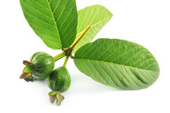 Guayaba y hojas Imagen de archivo