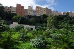 Guayadeque ravine. Agüimes. Gran Canaria. Canary Islands. Spain Stock Images