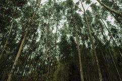 Gubjący w dużym lesie zdjęcie royalty free