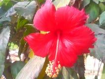 Gudhal kwiat fotografia royalty free