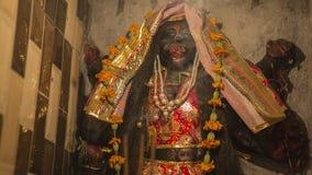 Gudinna Kali Ma och gud Bhairav Murti i den Jaipur templet nära loca Arkivbild