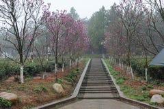 gudomlig bana för liggandemorgonpark Royaltyfria Bilder
