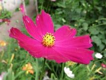 Gudomlig färg Royaltyfria Foton