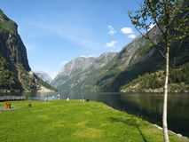 Gudvangen Fjord Royalty Free Stock Photo