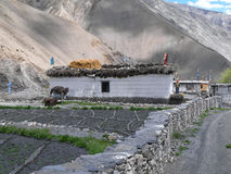 Gue-Dorf im indischen Himalaja Lizenzfreie Stockfotos