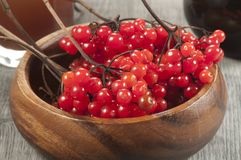 Guelder (arrowwood) berries and  syrup. Concentrated and diluted Royalty Free Stock Image