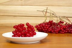 Guelder-rose Stock Photography