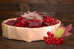 Guelder-rose berries Stock Photos