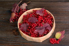 Guelder-rose berries Stock Photography