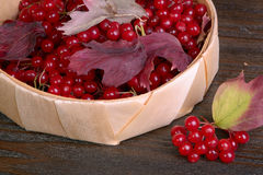 Guelder-rose berries Royalty Free Stock Images