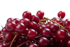 Guelder-rose berry Royalty Free Stock Photos