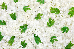 Guelder rose blossoms and myrtle leaves Stock Image
