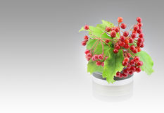Guelder rose Stock Photography