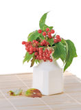 Guelder-rose (Viburnum opulus) Royalty Free Stock Images