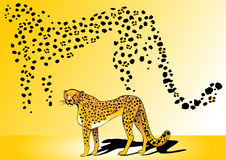 Guepard Photo stock