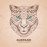 Guepard d'animal de hippie Museau de dessin de main de guepard Images libres de droits
