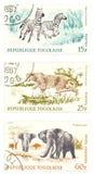 Guepardo, cebras, sellos del poste de los elefantes Fotos de archivo libres de regalías