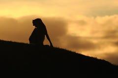 Guepardo en salida del sol Foto de archivo