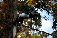 Guereza de Colobus Photographie stock libre de droits