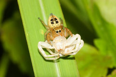 Guerra da aranha fotografia de stock