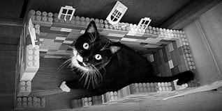 Guerre biologique NOIRE de CAT Lego Images stock
