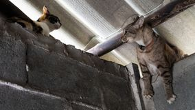 Guerre des chats dans le mur Photo libre de droits