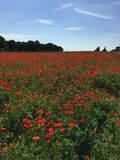 Guerre mondiale rouge de Poppys Photo libre de droits