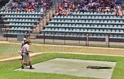 Guerreiros dos animais selvagens do jardim zoológico de Austrália Imagem de Stock Royalty Free