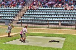 Guerreiros dos animais selvagens do jardim zoológico de Austrália Fotografia de Stock