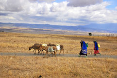 Guerrero del Masai que camina a través de la sabana Foto de archivo