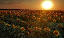 Guerres solaires Images libres de droits