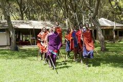 Guerrieri del villaggio di Maasi nella cerimonia, Ngorongoro Conservationa immagine stock
